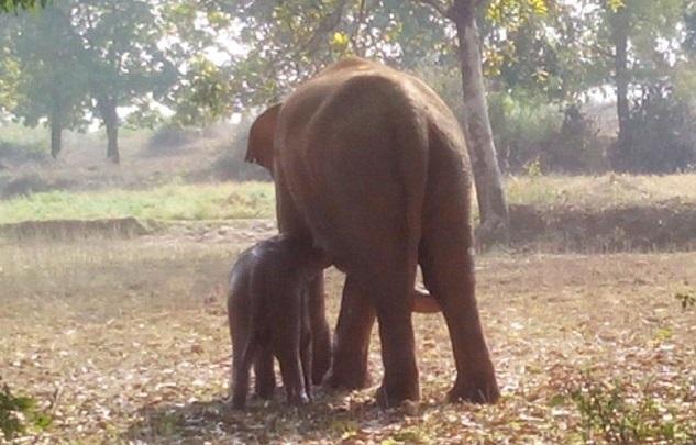 Incroyable : l'éléphant a finalement réussi à sauver son petit